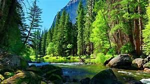 Mountain, River, Rock, Pine, Forest, Wallpaper, For, Desktop, 8915