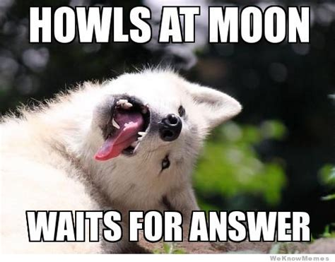 Moon Meme - 45 very funny wolf meme pictures that will make you laugh