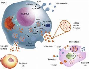 Extracellular Vesicles Derived From Mesenchymal Stromal