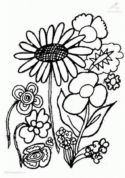 Coloring Plants