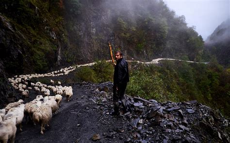 amos chapple captures animal migration  georgia daily