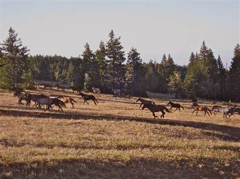 wild horse pryor mountain range horses montana mt herd tripadvisor save information states visitor