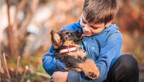 10 populārākās suņu šķirnes Latvijā - DELFI