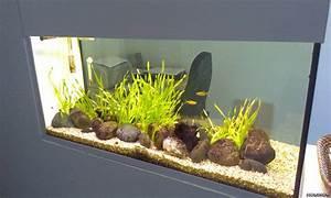 Aquarium Als Raumteiler : raumteiler flowgrow aquascape aquarien datenbank ~ Michelbontemps.com Haus und Dekorationen