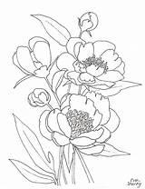 Peony Coloring Drawing Line Peonies Flower Printable Template Flowers Getdrawings Getcolorings Hanging Shorey Eva sketch template