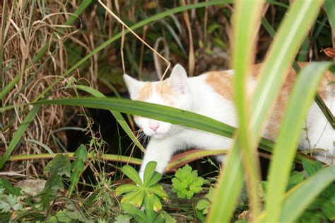 katzen im garten bekämpfen was hilft gegen katzen und deren kot im garten das gartenmagazin