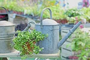 Bewässerungssystem Balkon Selber Bauen : pflanzen richtig gie en tolle tipps auf ideen ~ Whattoseeinmadrid.com Haus und Dekorationen