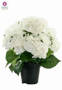 Hortensie Im Topf : hortensien im topf hortensien im topf mein sch ner garten hortensien im topf pflanzung und ~ Eleganceandgraceweddings.com Haus und Dekorationen