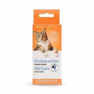 protege griffes pour chat transparent griffe masquee With nettoyage tapis avec griffe canapé chat