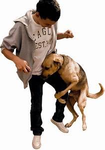Dog Humping Dog
