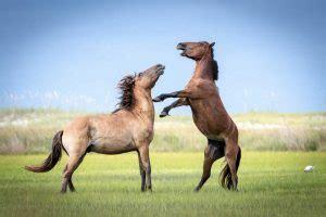 exostosen bei pferden mit klassischer homoeopathie