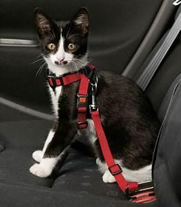 Harnais De Securite Pour Elagage : harnais et ceinture de securite pour chat ~ Edinachiropracticcenter.com Idées de Décoration