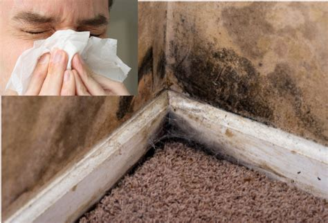 What Is Mold Illness And 11 Signs You Have It Daily