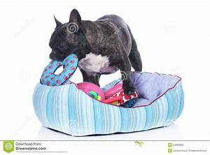 french dog bed korrectkritterscom With best dog beds for bulldogs