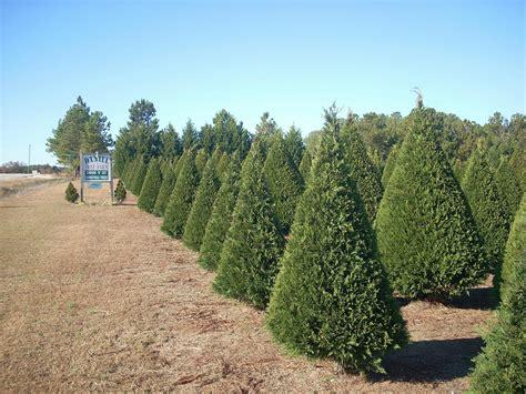 28 best christmas tree farms kansas lifestyle family