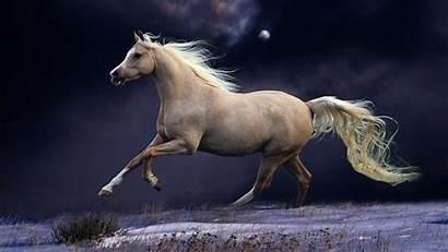 Horse Screensavers Wallpapers Desktops