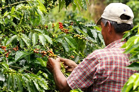 Colombian Coffee Production Rose 18% In February To 1.3 International Coffee Day Belgie Subscription Aeropress Celebration Think Tea Owner Gift Variety Wifi Password