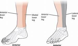 Lower Leg Pain