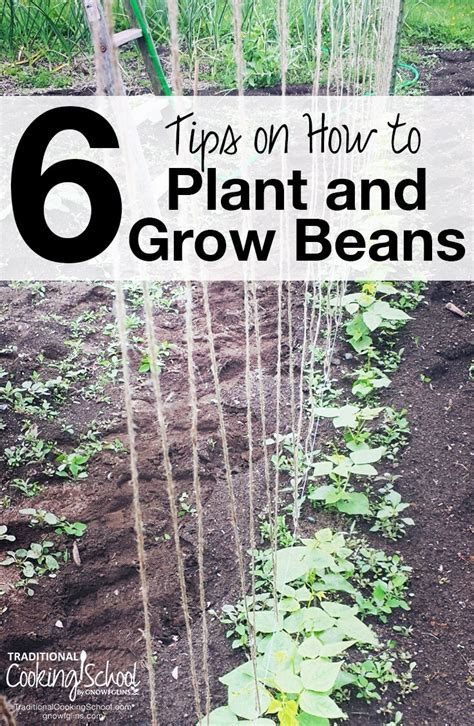 how to grow a garden how to grow green beans 6 tips
