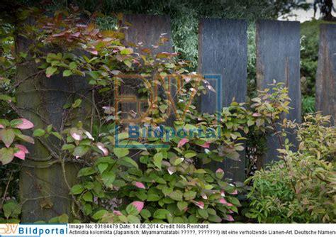 Sichtschutz Garten Steinplatten by Details Zu 0003184479 Sichtschutz Im Garten