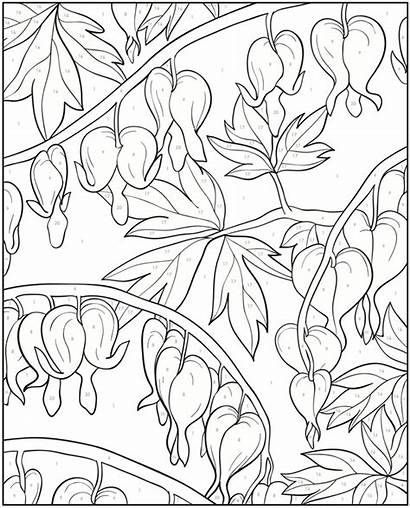 Coloring Pages Heart Bleeding Number Dover Adult