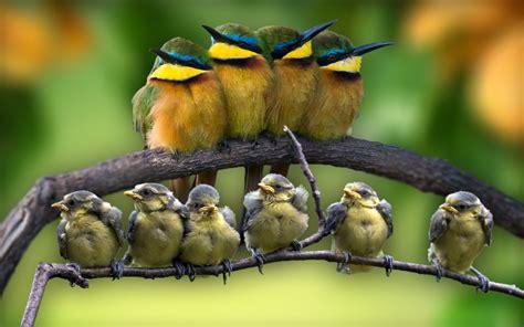 45 beautiful bird photos and wallpapers inspiringmesh