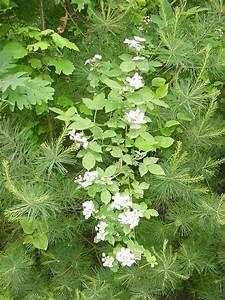 Cool Poison Ivy Flower For Ivy on Uncategorized Design ...