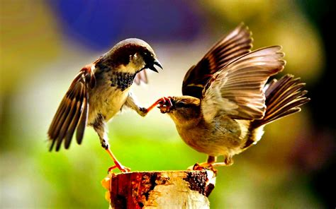Birds HD Wallpapers and Background Images - Static ...
