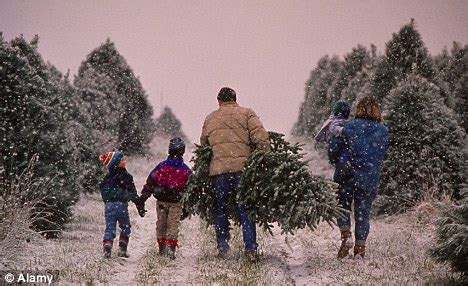 obama to hit americans with 15 cent christmas tree tax daily mail online