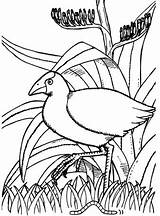 Quiver Coloring Pages App Quivervision Colouring Reality Starter Pukeko Augmented Boyama Nz Printable Apps Getdrawings 3d Bird Virtual Getcolorings Kaynak sketch template