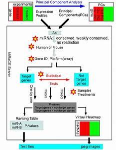 Schematic Diagram Of Mirage Method  Gene Expression