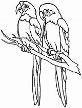 Coloring Pages Parrot Parrots Printable sketch template