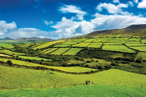 ireland fields pastures sector aviation moving ttg irelands industry main