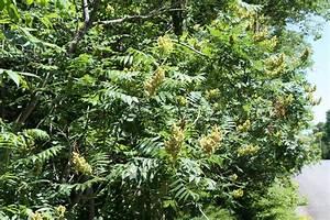 Arbustes Décoratifs à Fleurs : arbuste caduc liste ooreka ~ Premium-room.com Idées de Décoration