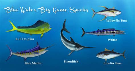 alabama gulf coast fish species   catch