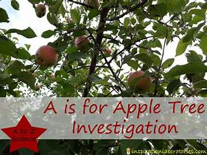 A Is For Apple Tree Investigation