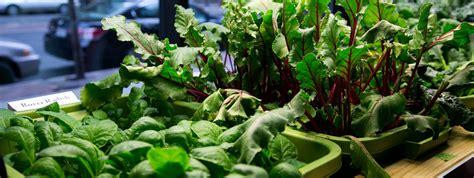Best Windowsill Vegetables by 6 Step Guide To Indoor Vegetable Gardening Beginners Guide