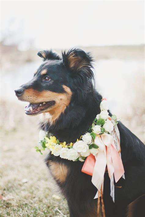 canines  crowns flirty fleurs  florist blog