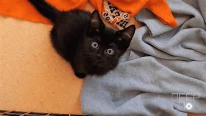 Kitten Kittens Week Clueless Plays Newborn Five