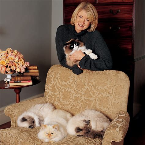 remove pet hair  upholstery martha stewart