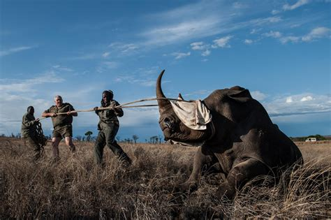 Rhino Poaching Numbers Fall In South Africa In 2015