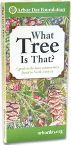 Garden Centers Maine by What Tree Is That Tree Identification Guide At Arborday Org