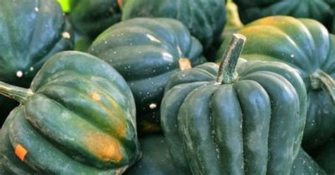 acorn squash nutrition information livestrongcom