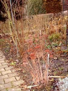 Gartenarbeit Im Februar : gartenarbeit im februar der gartenratgeber ~ Lizthompson.info Haus und Dekorationen