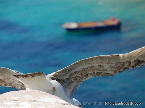 Il Gabbiano Tremiti by Foto Isole Tremiti Isole Tremiti