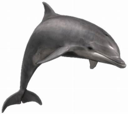 Dolphin Bottlenose Zoo Dolphins Tycoon Marine Sleep