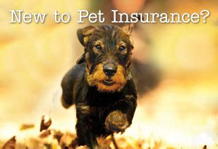 pet insurance quotes pet insurance quotes uk image quotes at relatably
