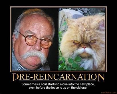 Reincarnation Funny Quotes Quotesgram Quote Nice