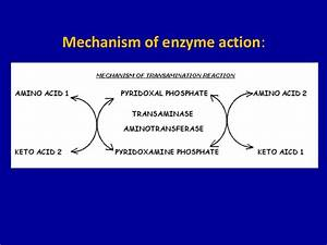 General Reactions Involved In Amino Acid Metabolism