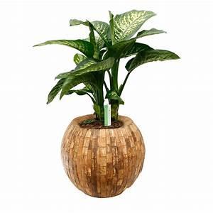 Aloe Vera Umtopfen : pflanzen umtopfen awesome umtopfen anlage aloe vera mit wurzeln in erde umtopfen zu greren ~ Eleganceandgraceweddings.com Haus und Dekorationen